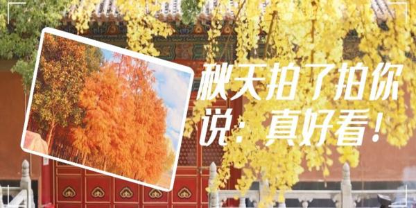 一起拥抱自带滤镜的秋天吧!